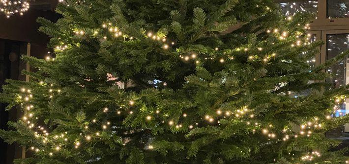 Ökologische Weihnachtsbäume präsentiert von www.schabel-kultur-blog.de